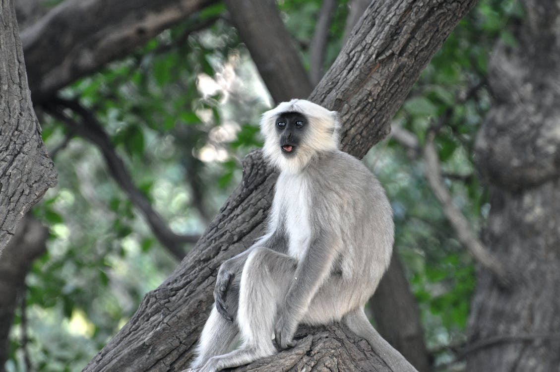Grey and White Monkey on Tree Branch