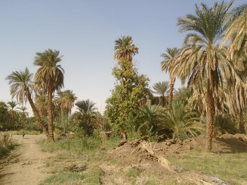 Ilmainen kuvapankkikuva tunnisteilla luonto, palmu, puut