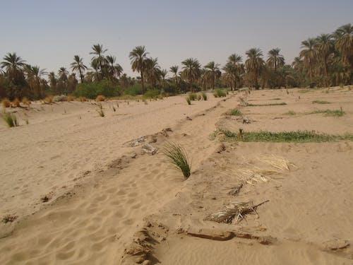 Ilmainen kuvapankkikuva tunnisteilla nautre, palmu, puut