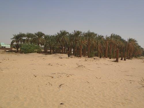 Ilmainen kuvapankkikuva tunnisteilla palmu, puut