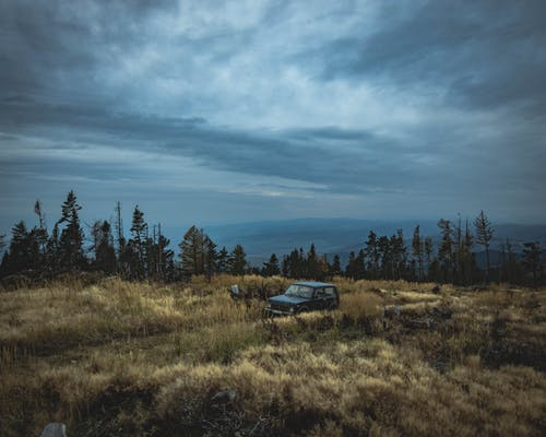Foto profissional grátis de árvores, caminho, campina, carro