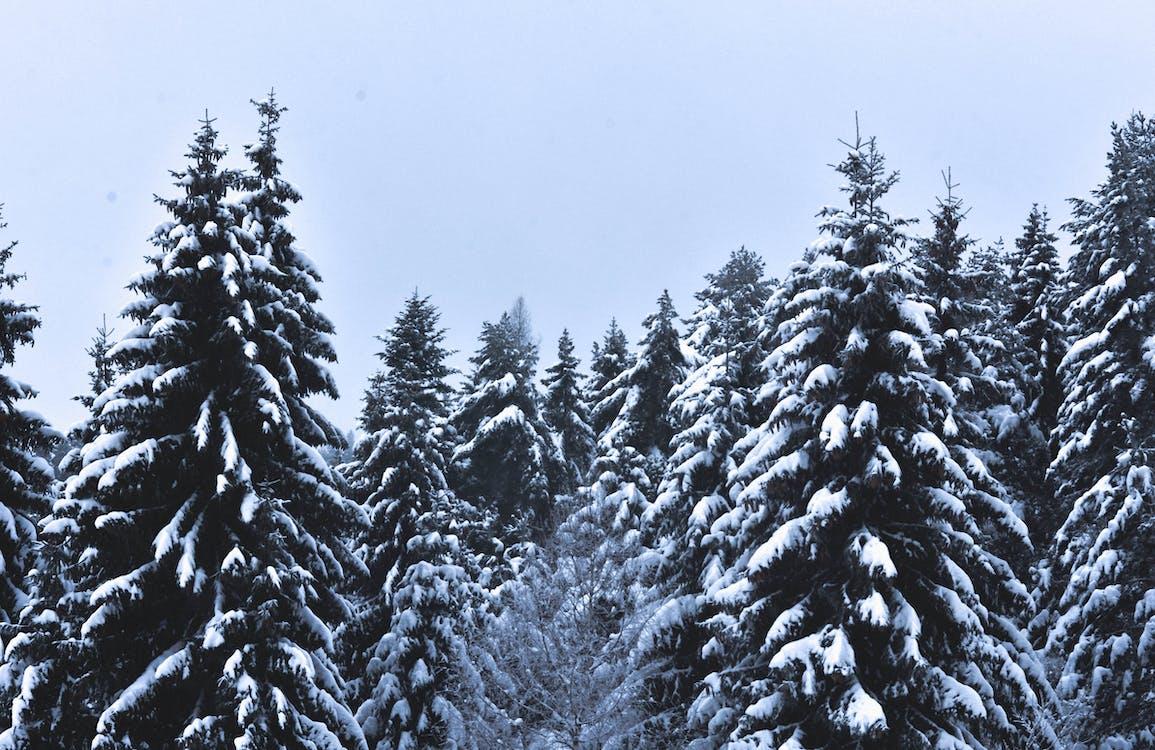 açık hava, ağaçlar, buz