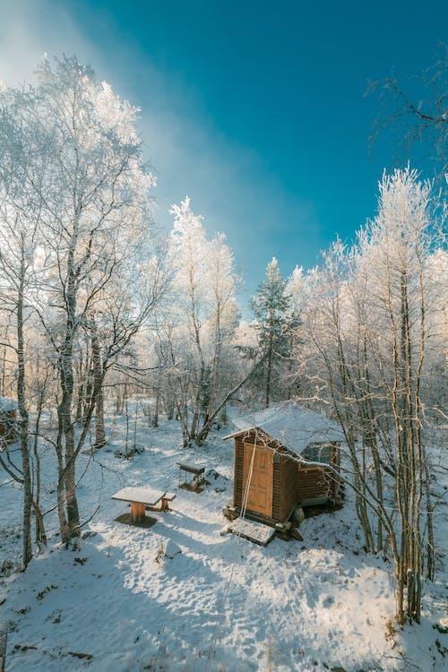 Бесплатное стоковое фото с деревья, дневной свет, зима, лес