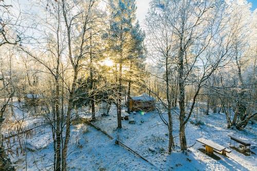 Gratis stockfoto met besneeuwd, bomen, daglicht, kou