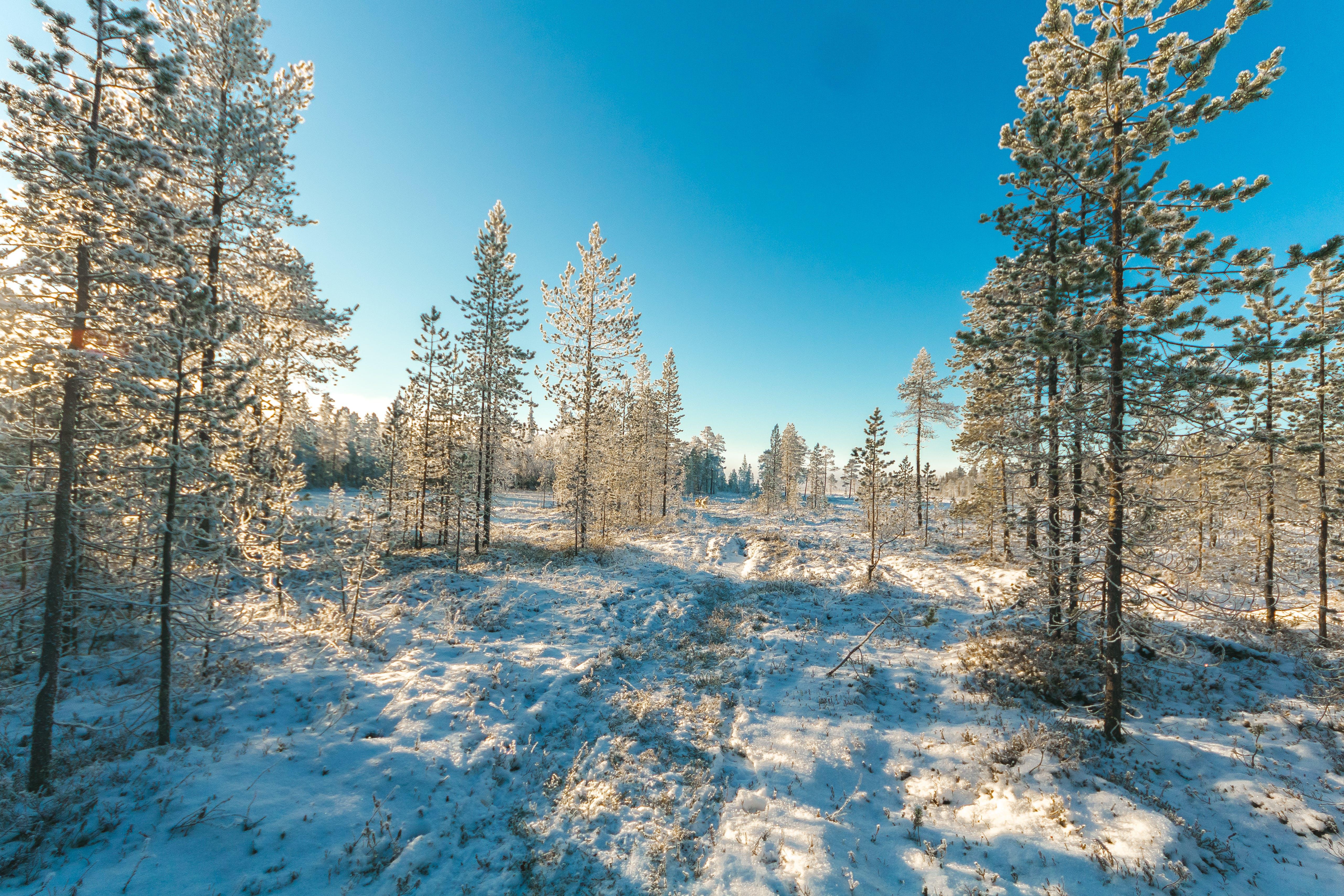ağaçlar, buz tutmuş, çam, çevre içeren Ücretsiz stok fotoğraf