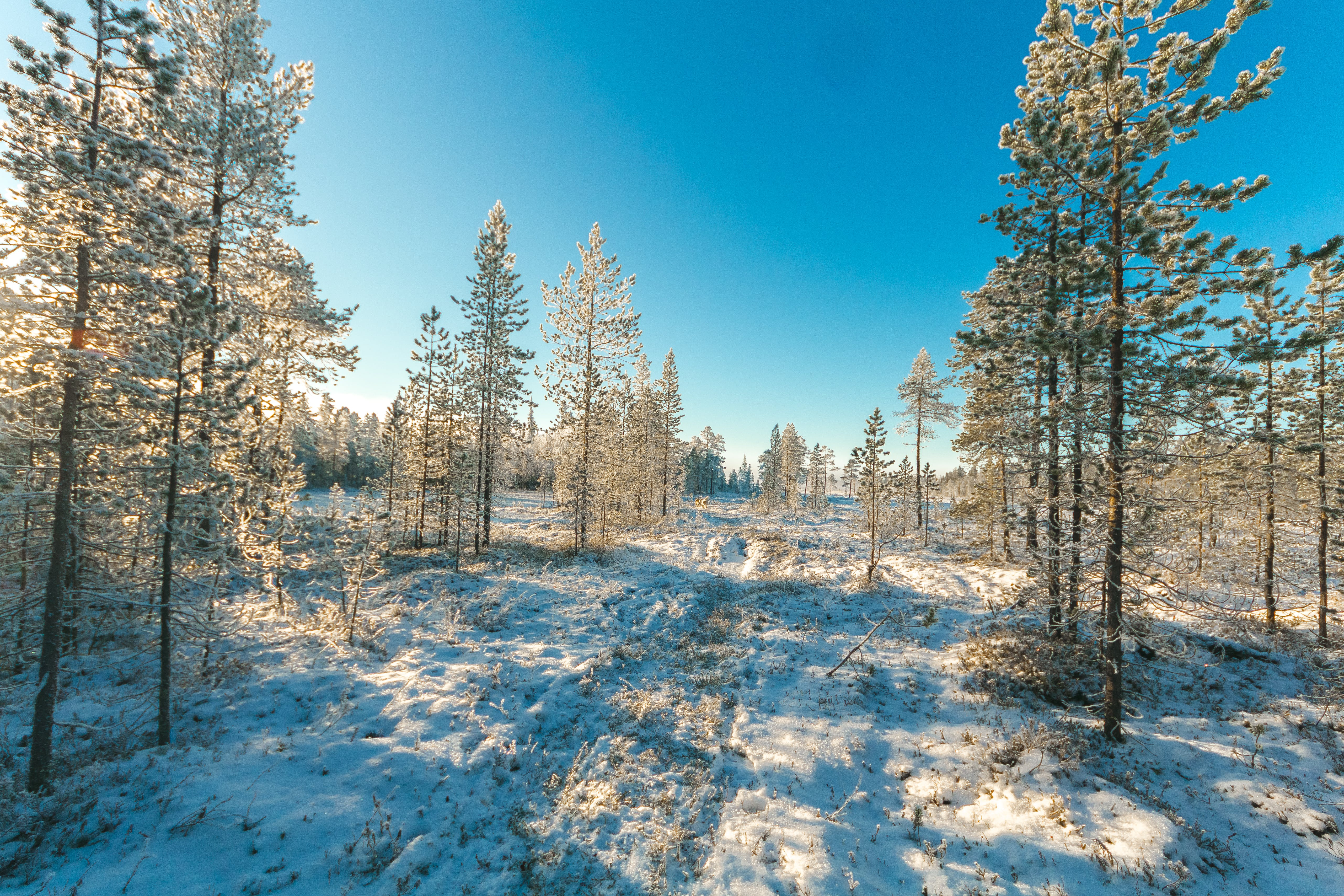 Snow Covered Field and Green Leaf Trees Under Blue Sky