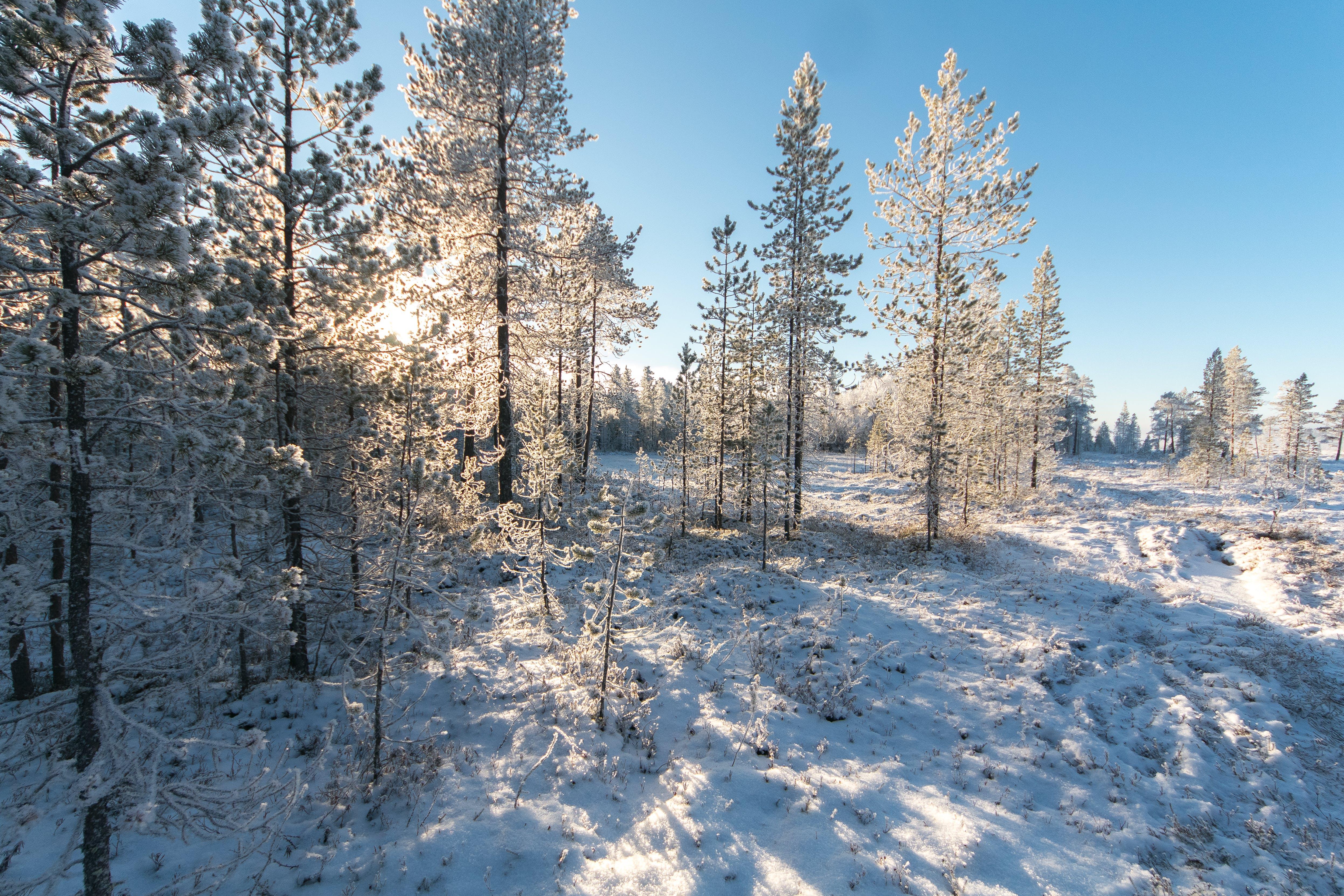 Kostenloses Stock Foto zu bäume, draußen, jahreszeit, kalt
