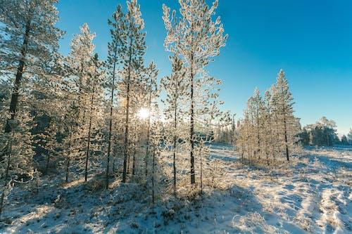 Ingyenes stockfotó évszak, fagy, fagyos, fák témában