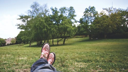 Photos gratuites de arbres, détendu, herbe, herbe verte
