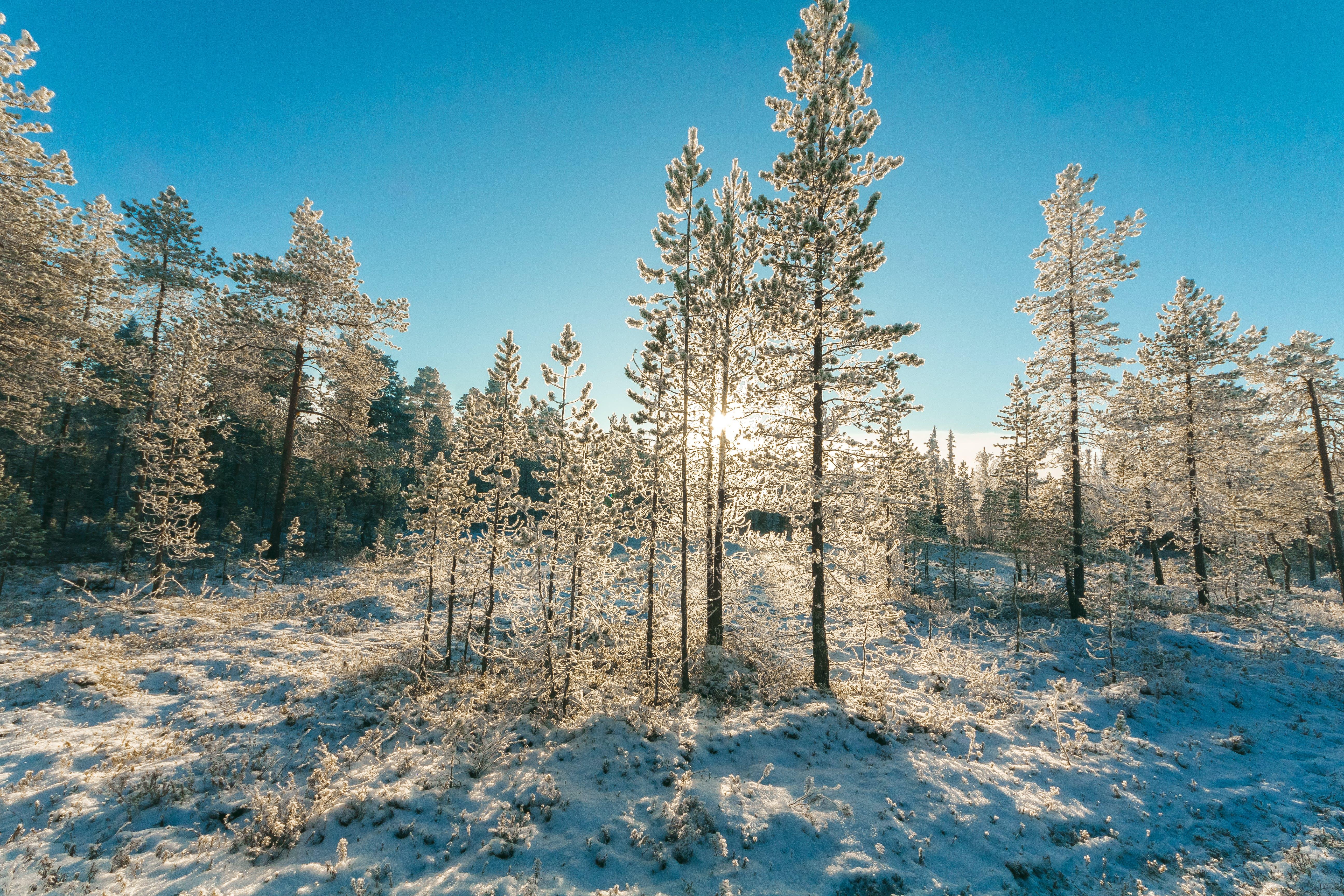 ağaçlar, çevre, doğa, don içeren Ücretsiz stok fotoğraf