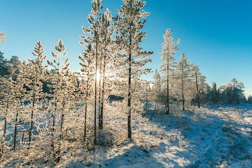 Gratis lagerfoto af dagtimer, forkølelse, frost, malerisk