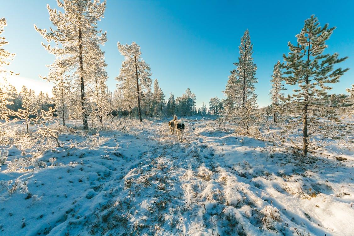alberi, animali, boschi