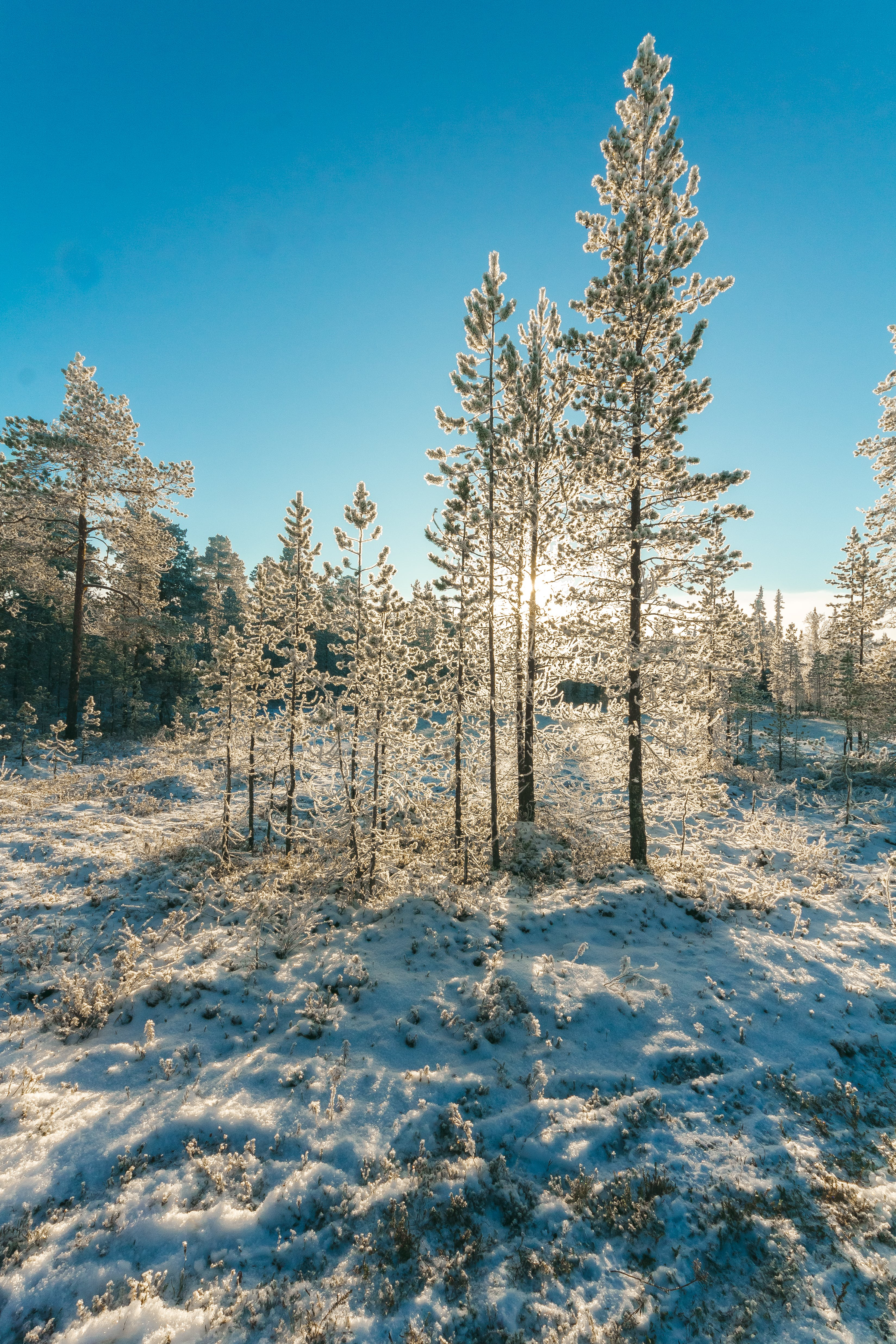 Snow Covered Forest Under Clear Blue Sky