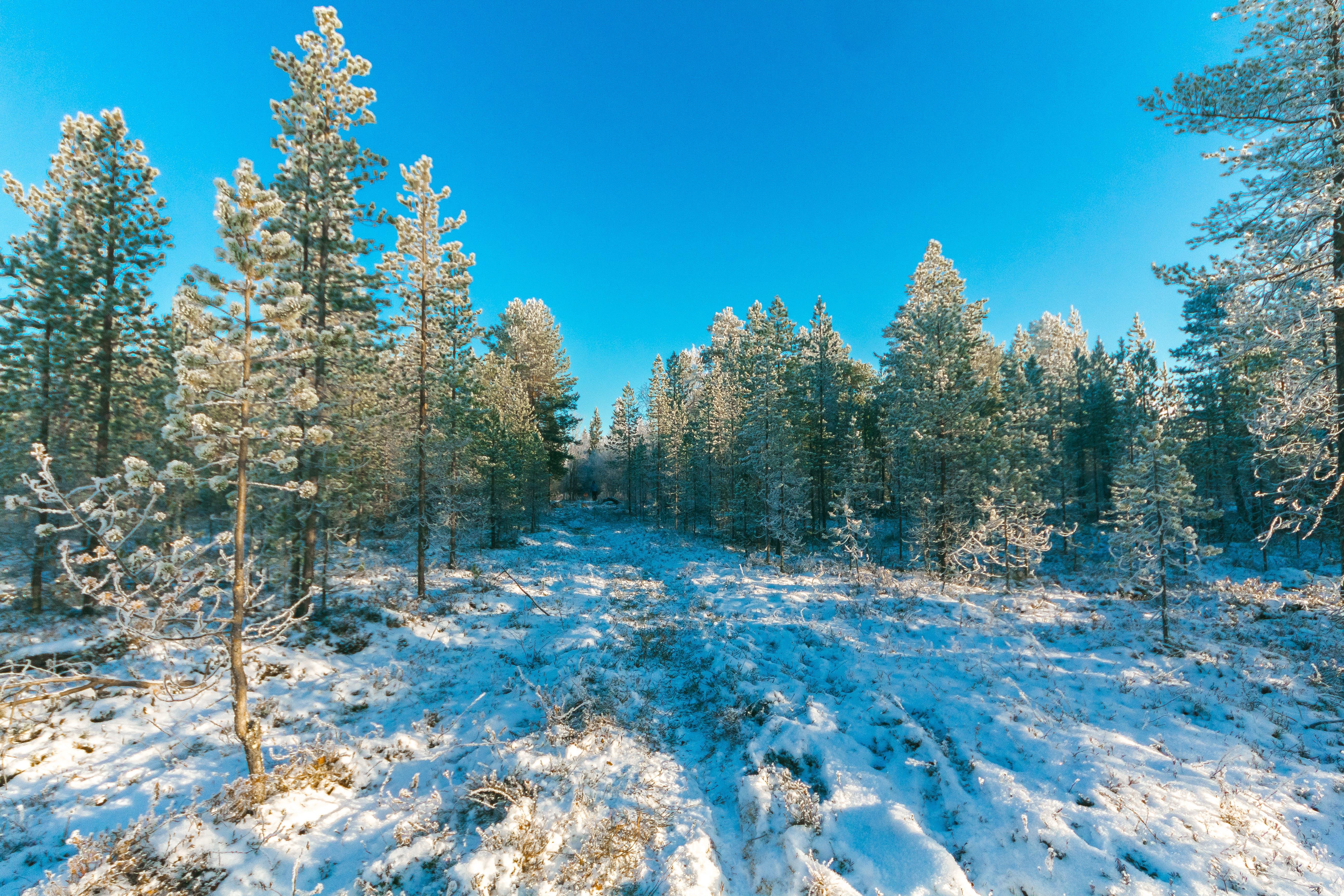 Ingyenes stockfotó erdő, évszak, fák, festői témában