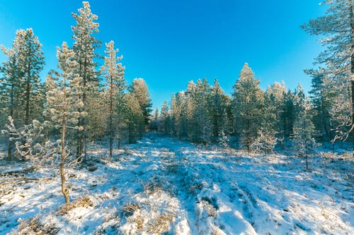 Landscape Photo of Trees during Snow