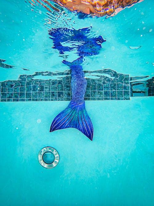 Darmowe zdjęcie z galerii z akwarium, basen, bezpieczeństwo wody
