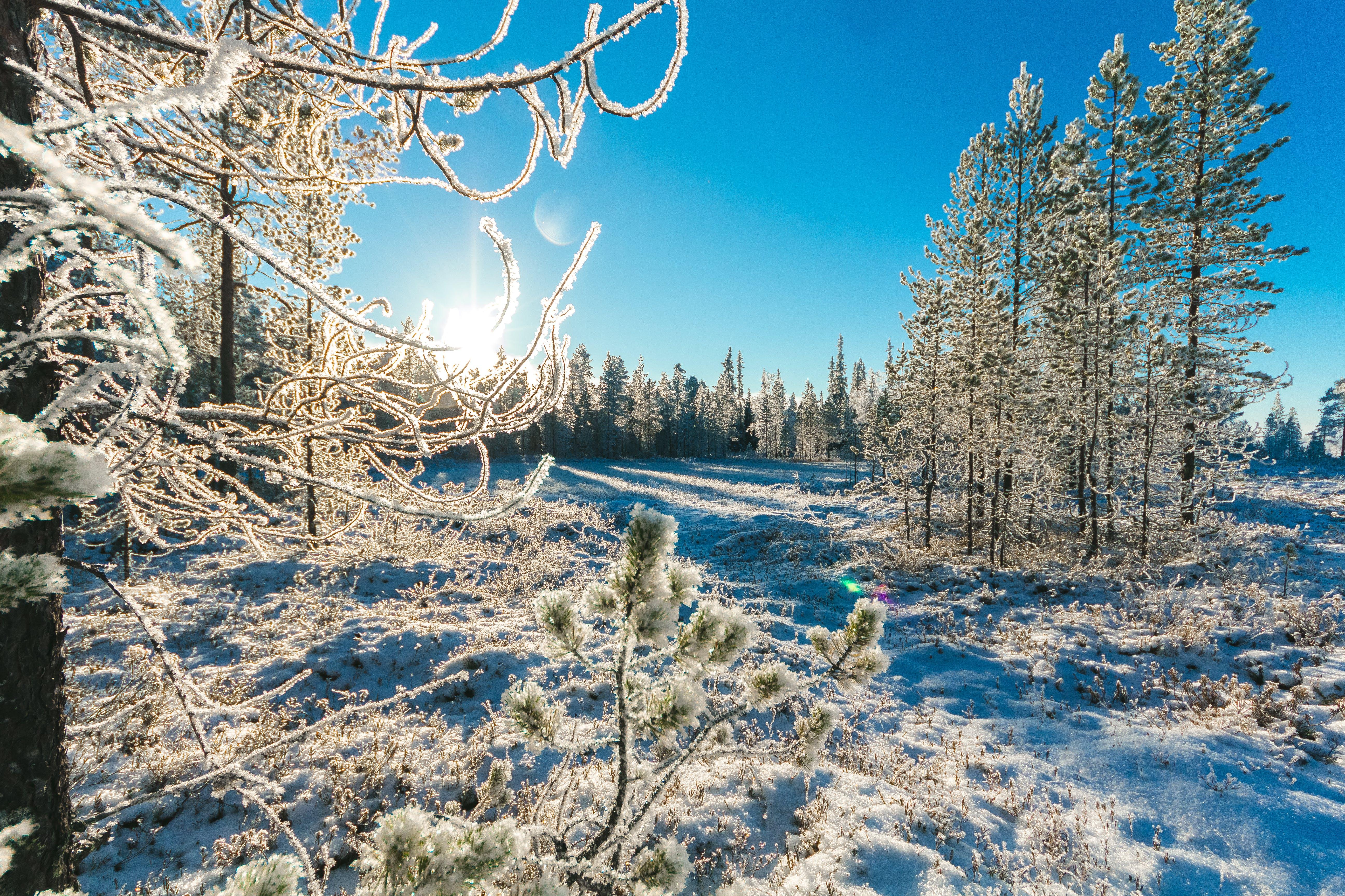 Ảnh lưu trữ miễn phí về ánh sáng ban ngày, cây, chụp ảnh thiên nhiên, có tuyết rơi