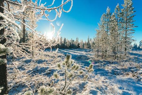 Ingyenes stockfotó erdő, évszak, fagyos, fák témában