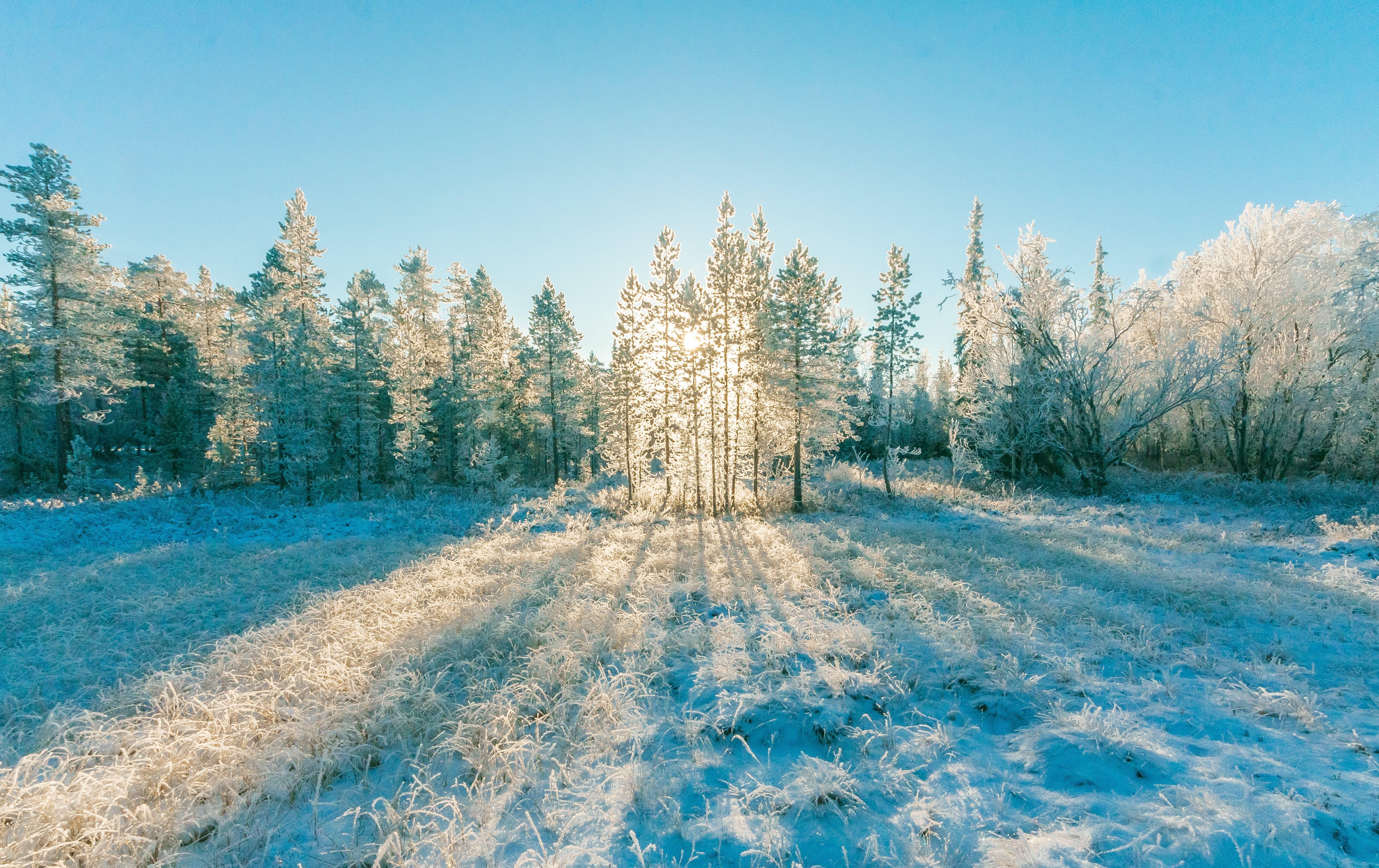 Foto d'estoc gratuïta de arbres, bosc, boscos, cobert de neu