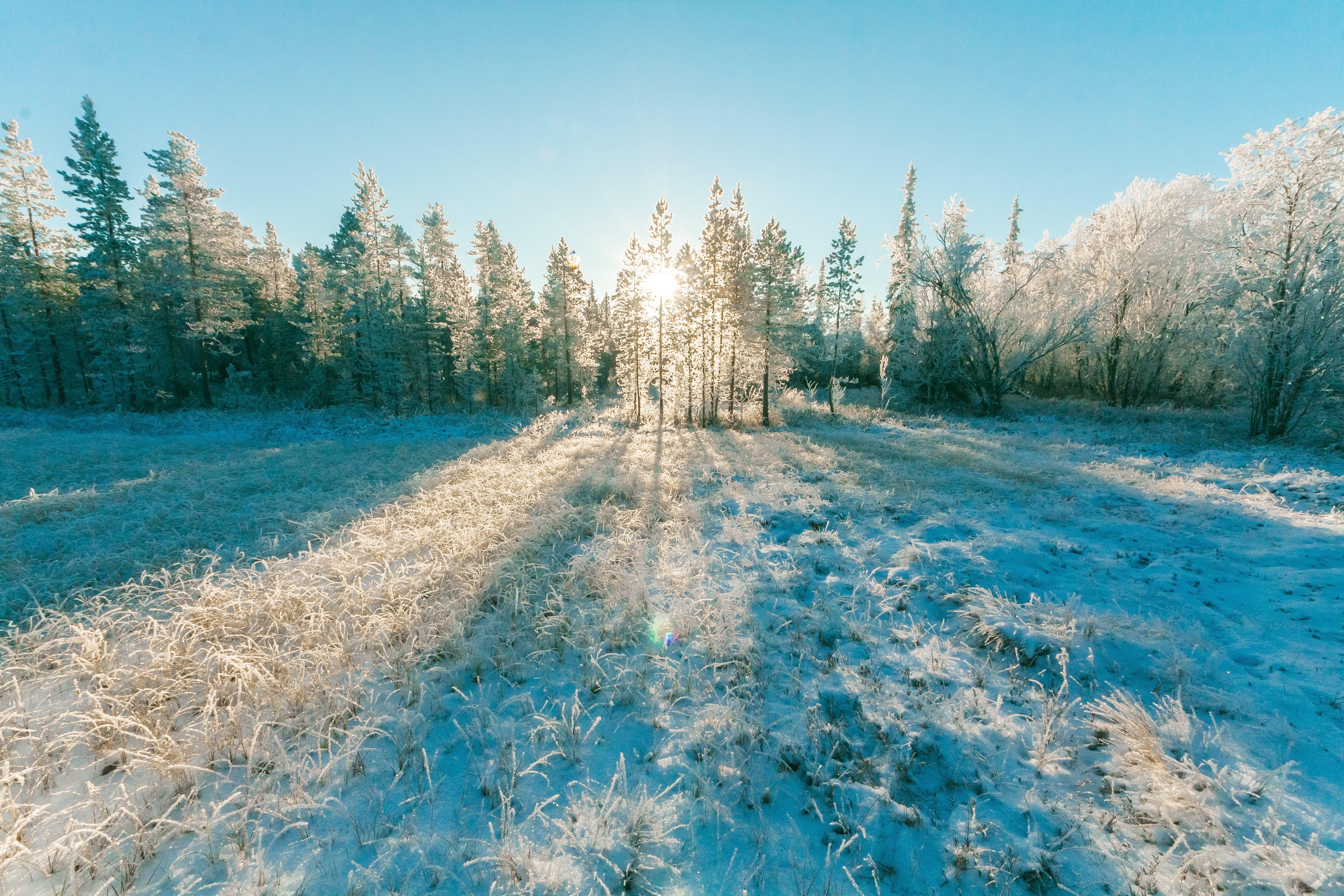 Landscape Photo of Sun Raise Through Green Leaf Trees