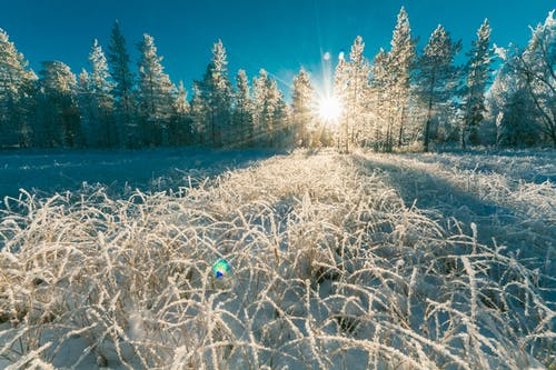 Darmowe zdjęcie z galerii z drzewa, las, lód, lodowaty