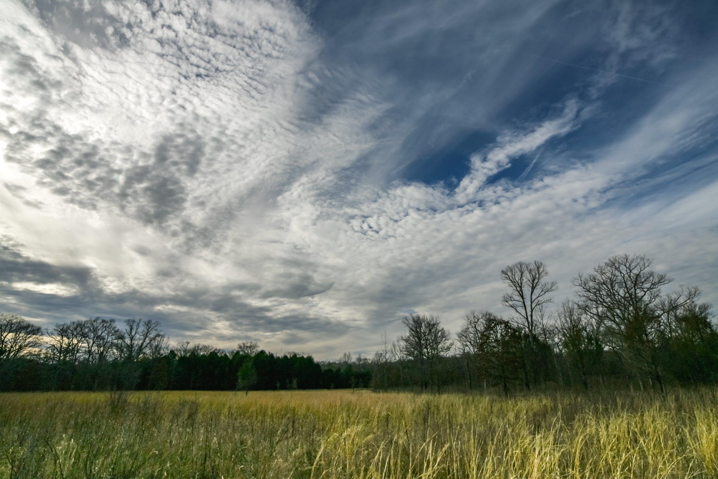 Foto d'estoc gratuïta de arbres, brillant, camp, cel