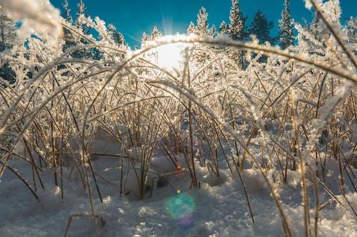 Безкоштовне стокове фото на тему «outdoorchallenge, іній, дерева, замерзання»