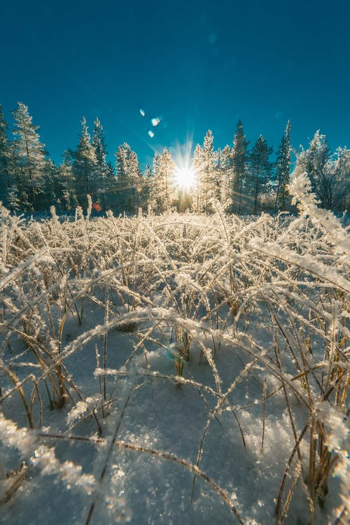 Imagine de stoc gratuită din anotimp, arbori, codru, congelare
