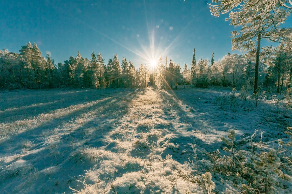 krajina, les, malebný