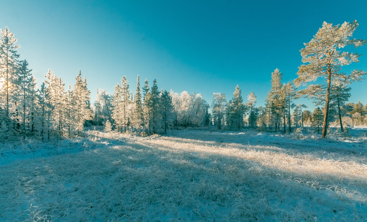 cold, forest, freezing