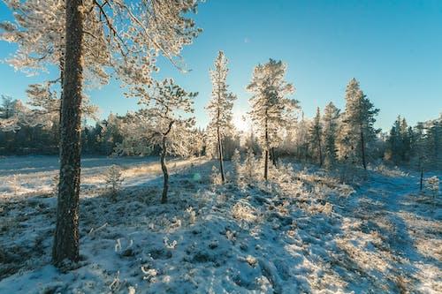 Základová fotografie zdarma na téma denní, malebný, počasí, příroda