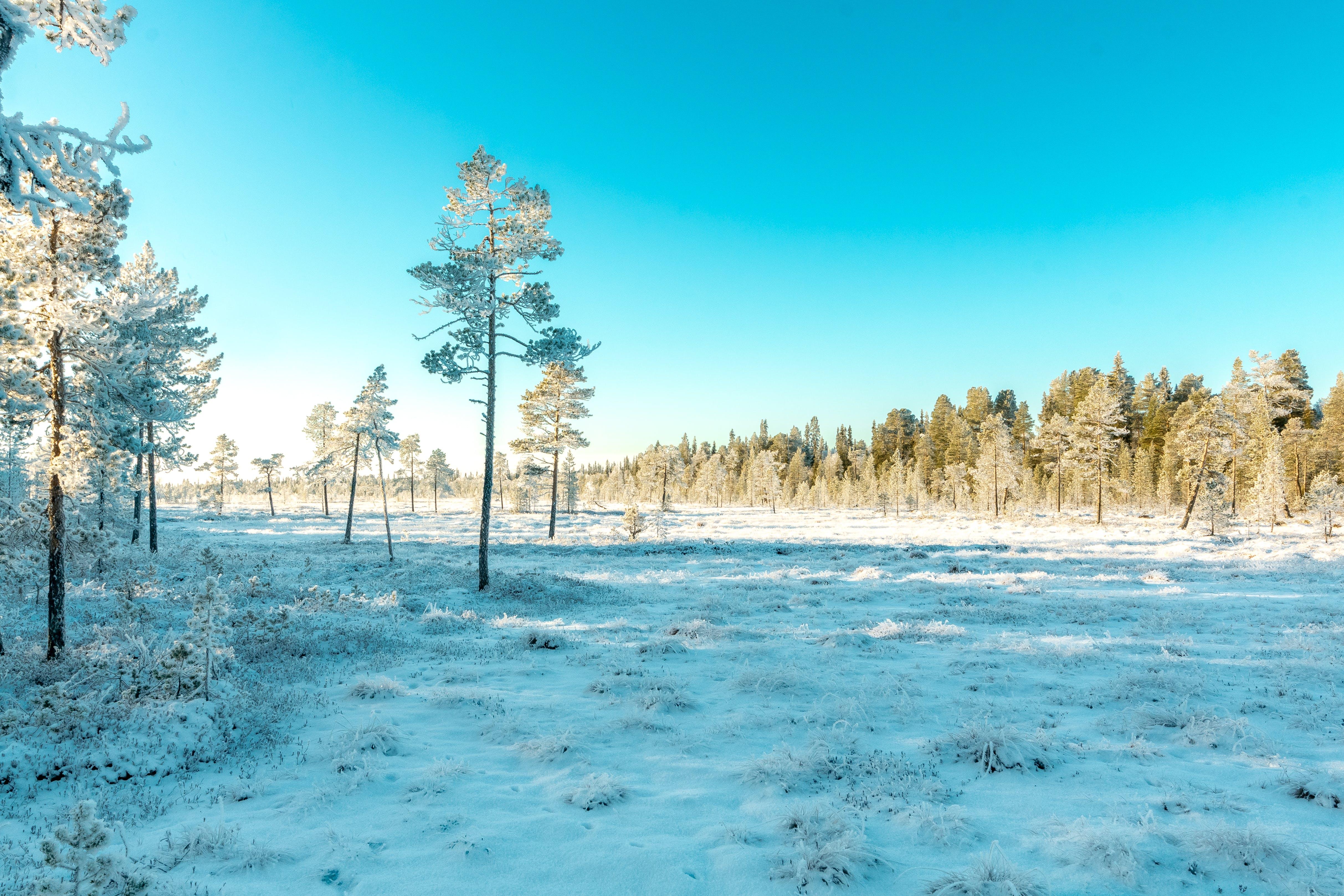 下雪的, 似雪, 冬季