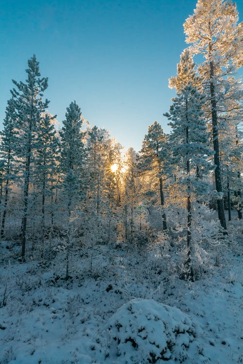 Free stock photo of cold, forest, freezing
