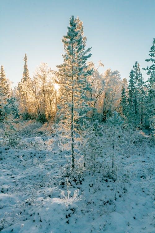 Základová fotografie zdarma na téma krajina, les, malebný, mráz