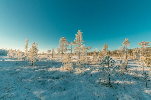 Landscape Photography of Snowy Forest Under Clear Sky
