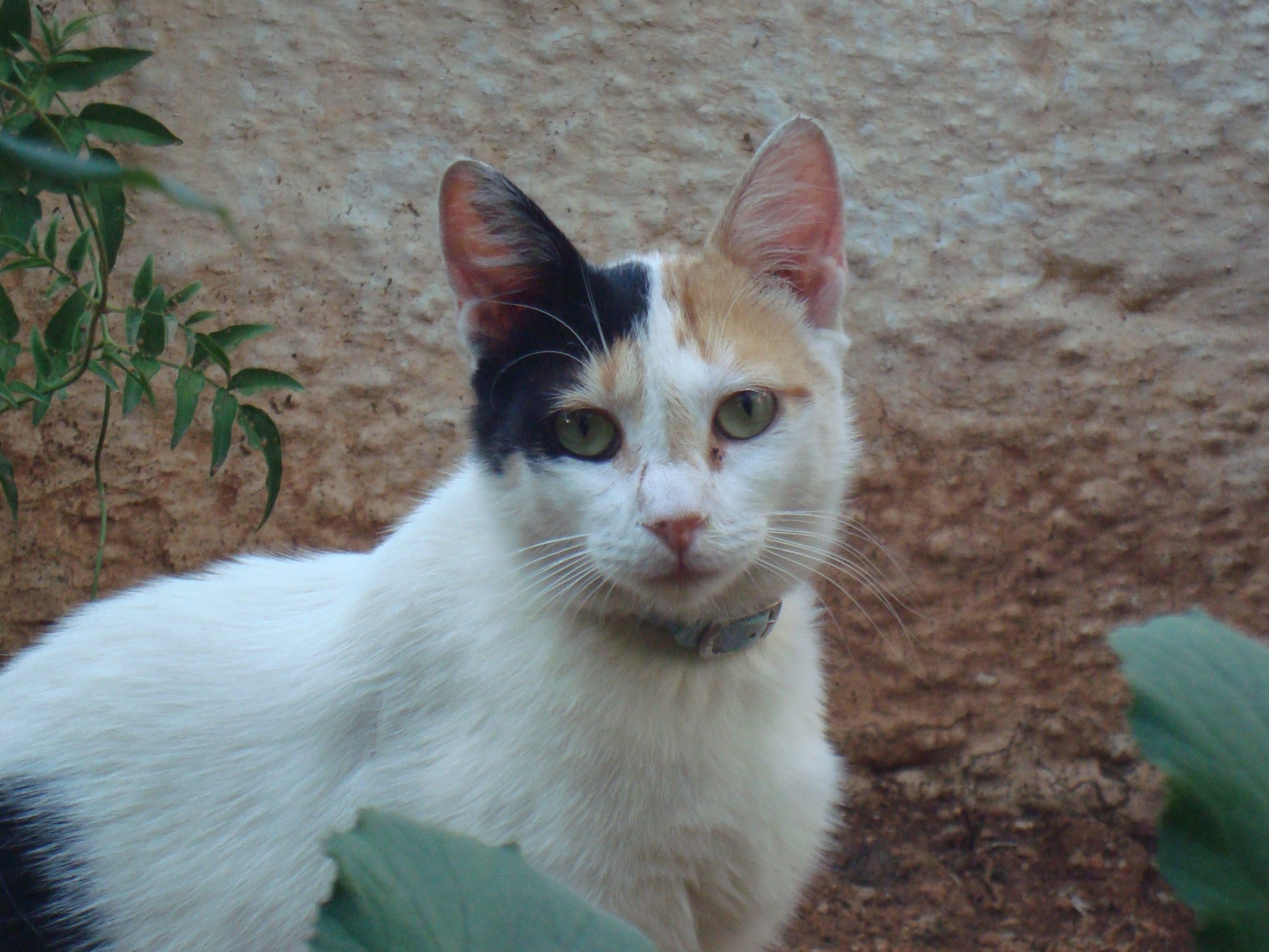 Free stock photo of animal, cat, eyes