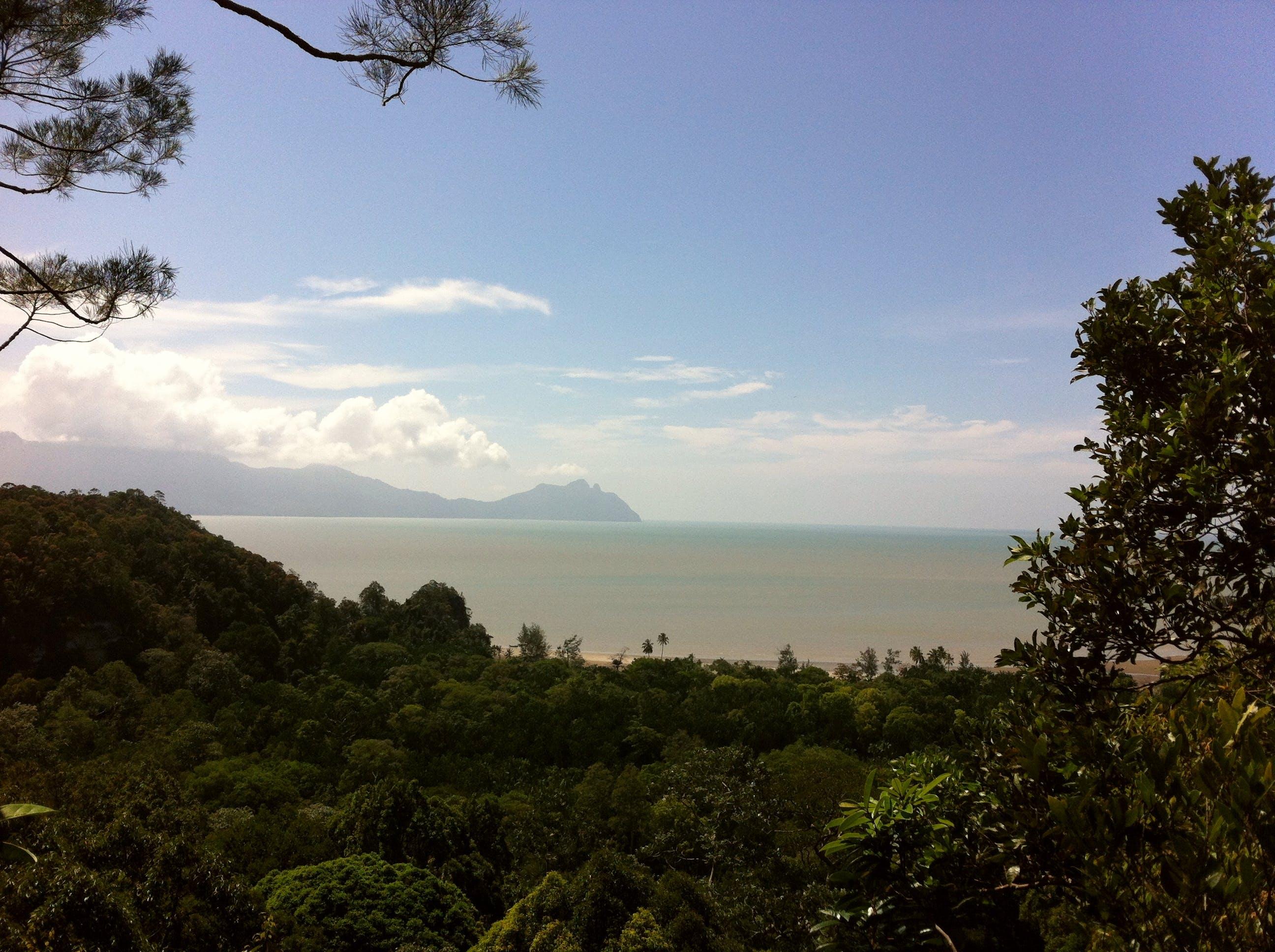 Free stock photo of jungle, sea, view
