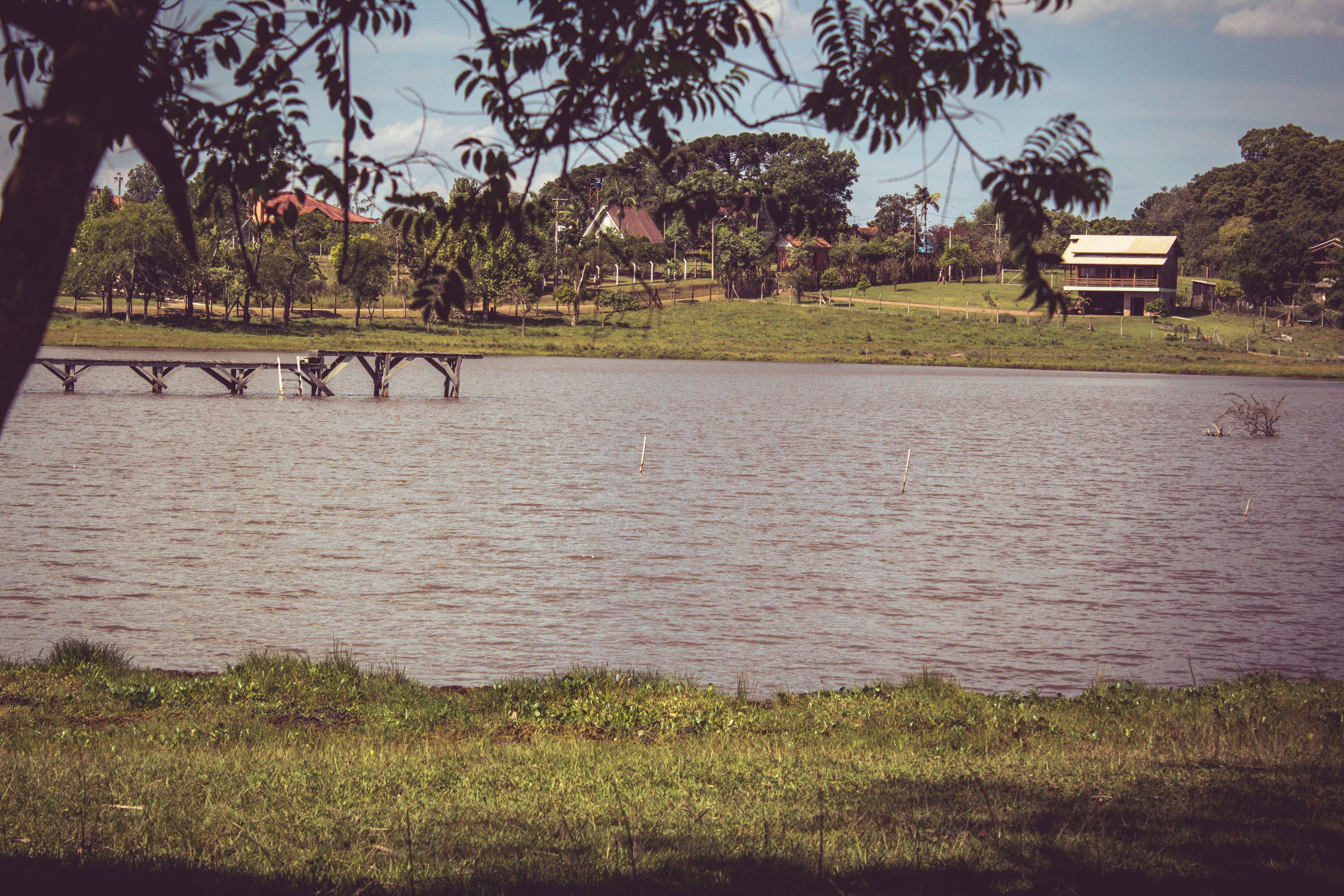 Free stock photo of amazing, blue, bridge, forest
