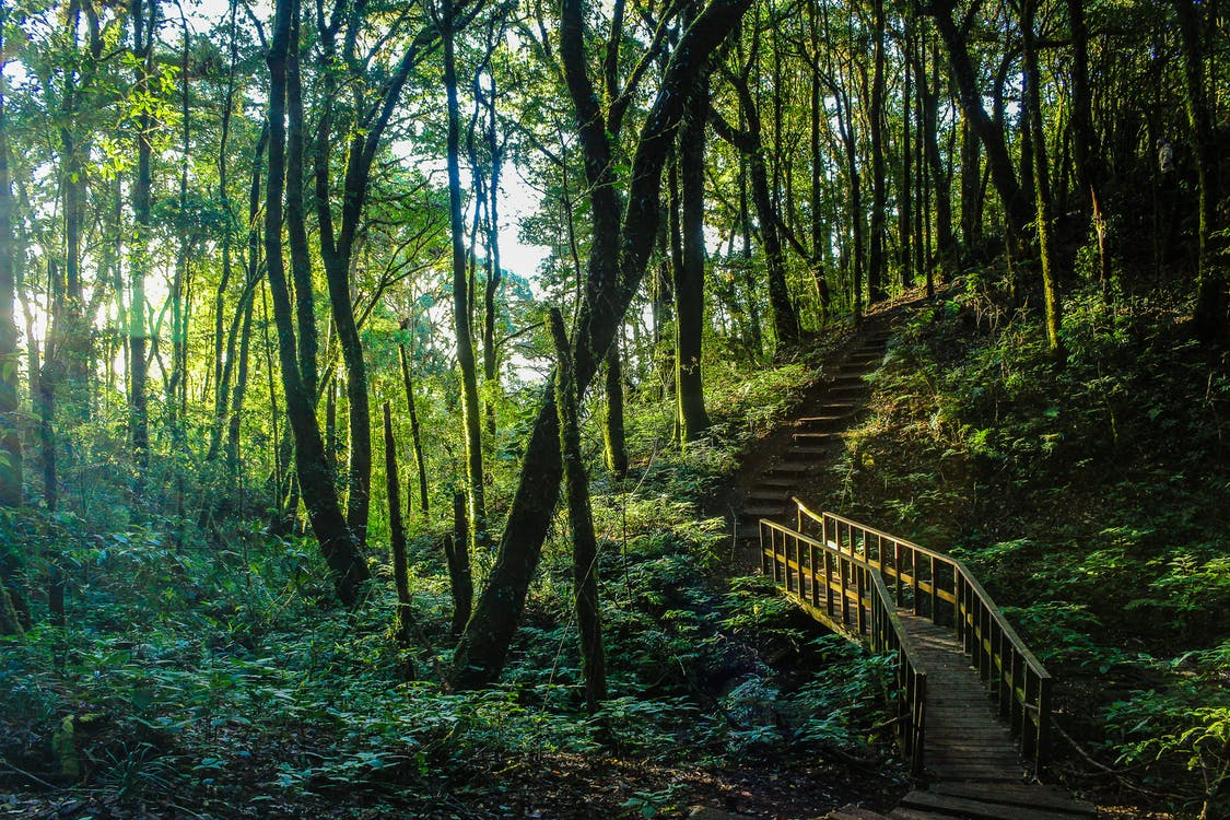 Pohon-pohon tinggi dan besar seperti meranti atau kayu besi kerap ditemukan di daerah hutan hujan