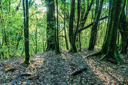 Foto stok gratis alam, alami, bagus, batang pohon