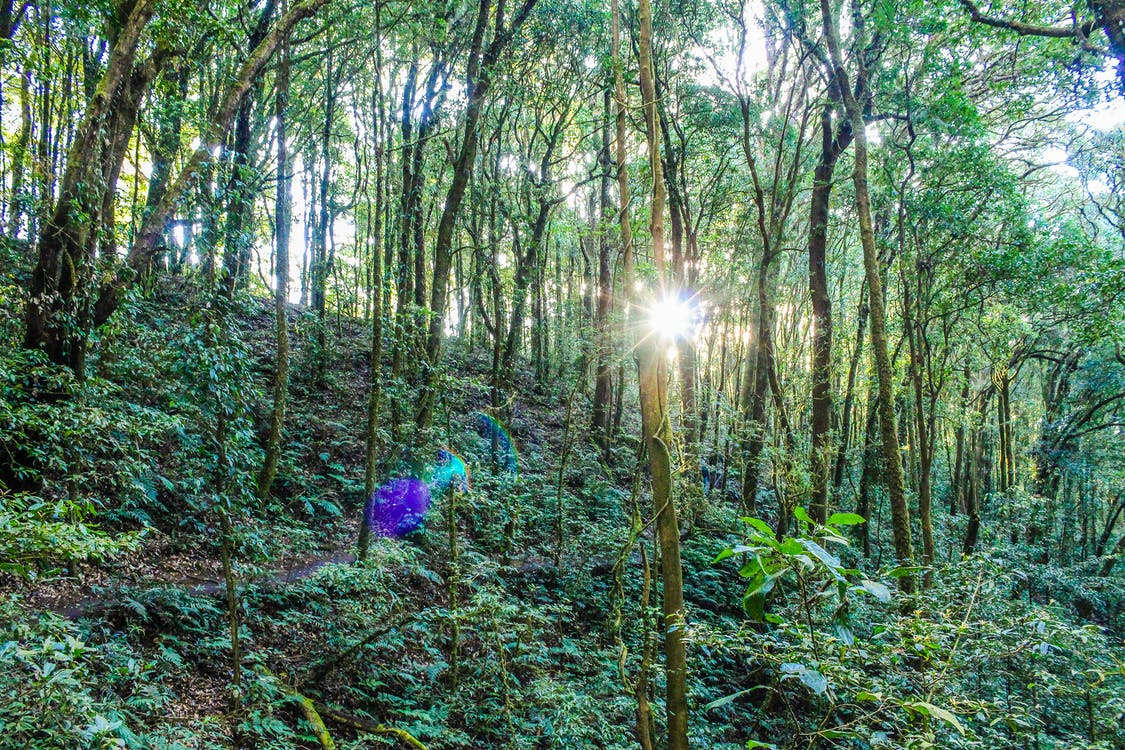 drzewa, dżungla, góra