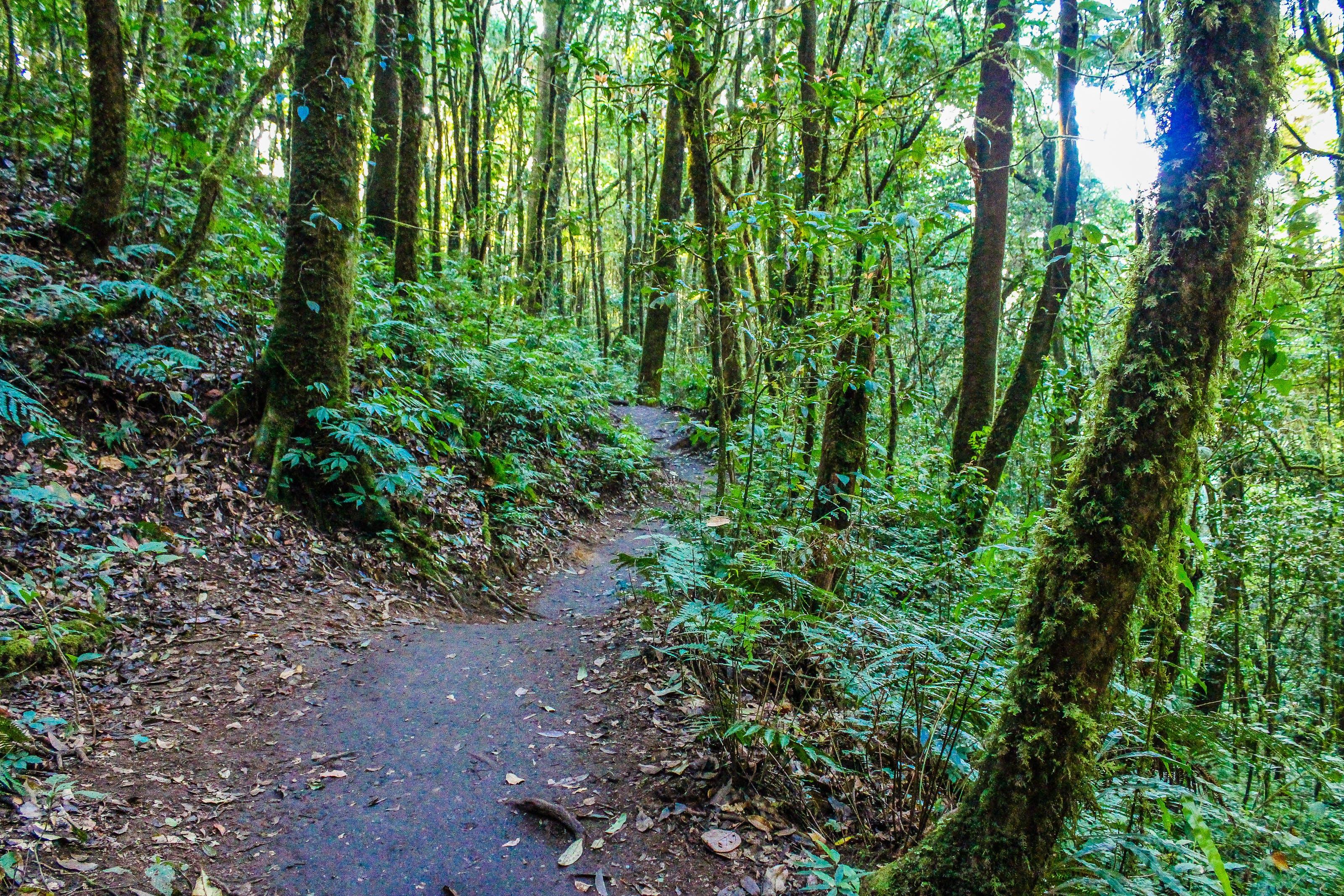 경치가 좋은, 길, 나무, 밀림의 무료 스톡 사진
