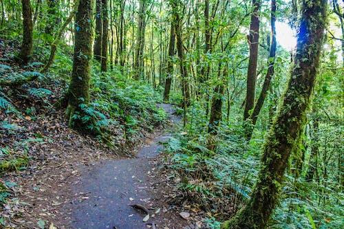 Ilmainen kuvapankkikuva tunnisteilla kasvit, luonto, metsä, polku