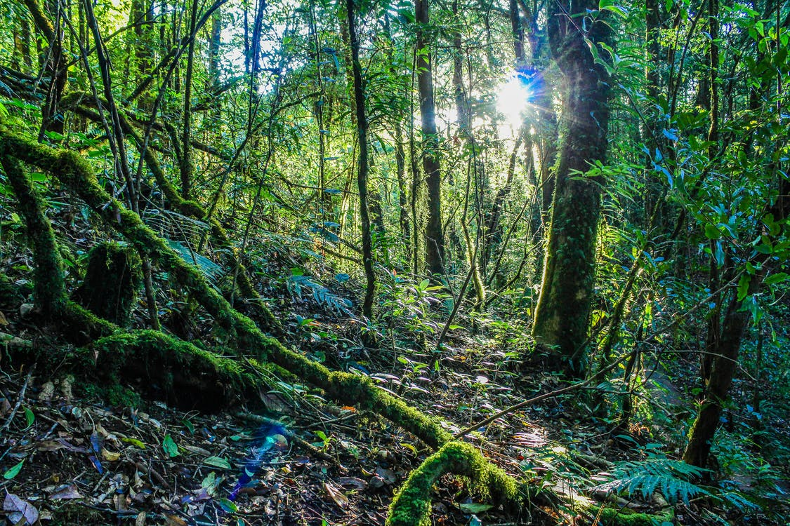 Inside Forest Photography