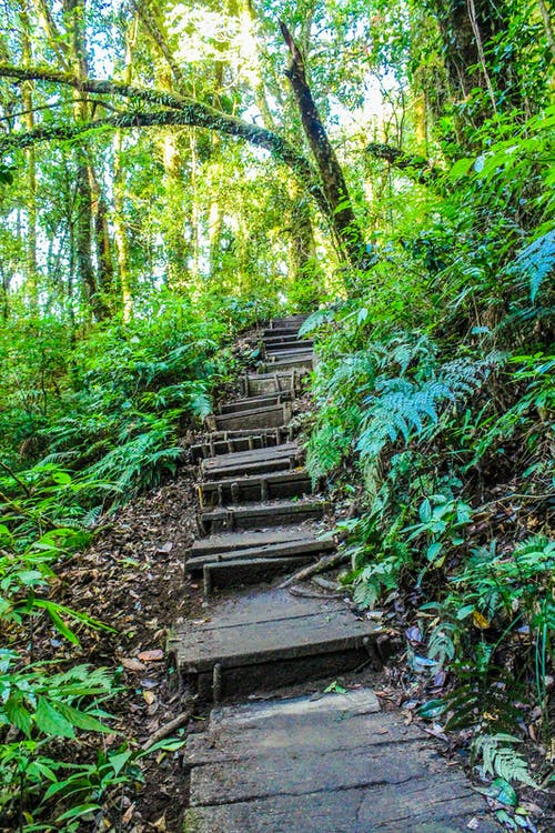 Landscape Photo of Stair in the Forest
