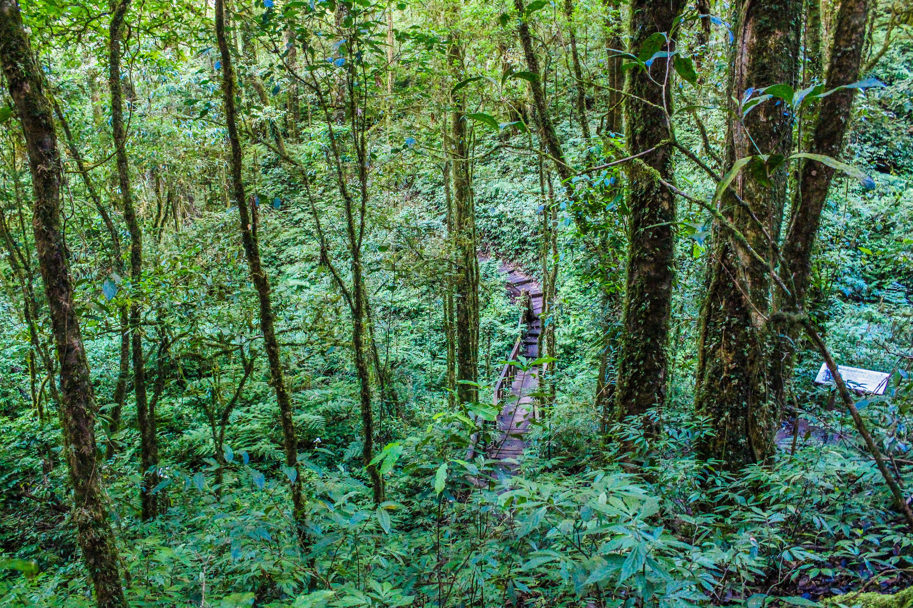 Kostenloses Stock Foto zu abenteuer, bäume, baumstamm, berg