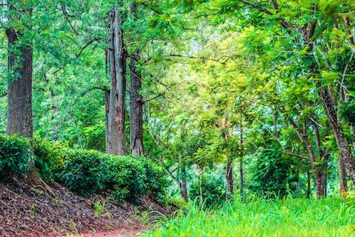 Kostnadsfri bild av anläggning, gräs, grönska, löv