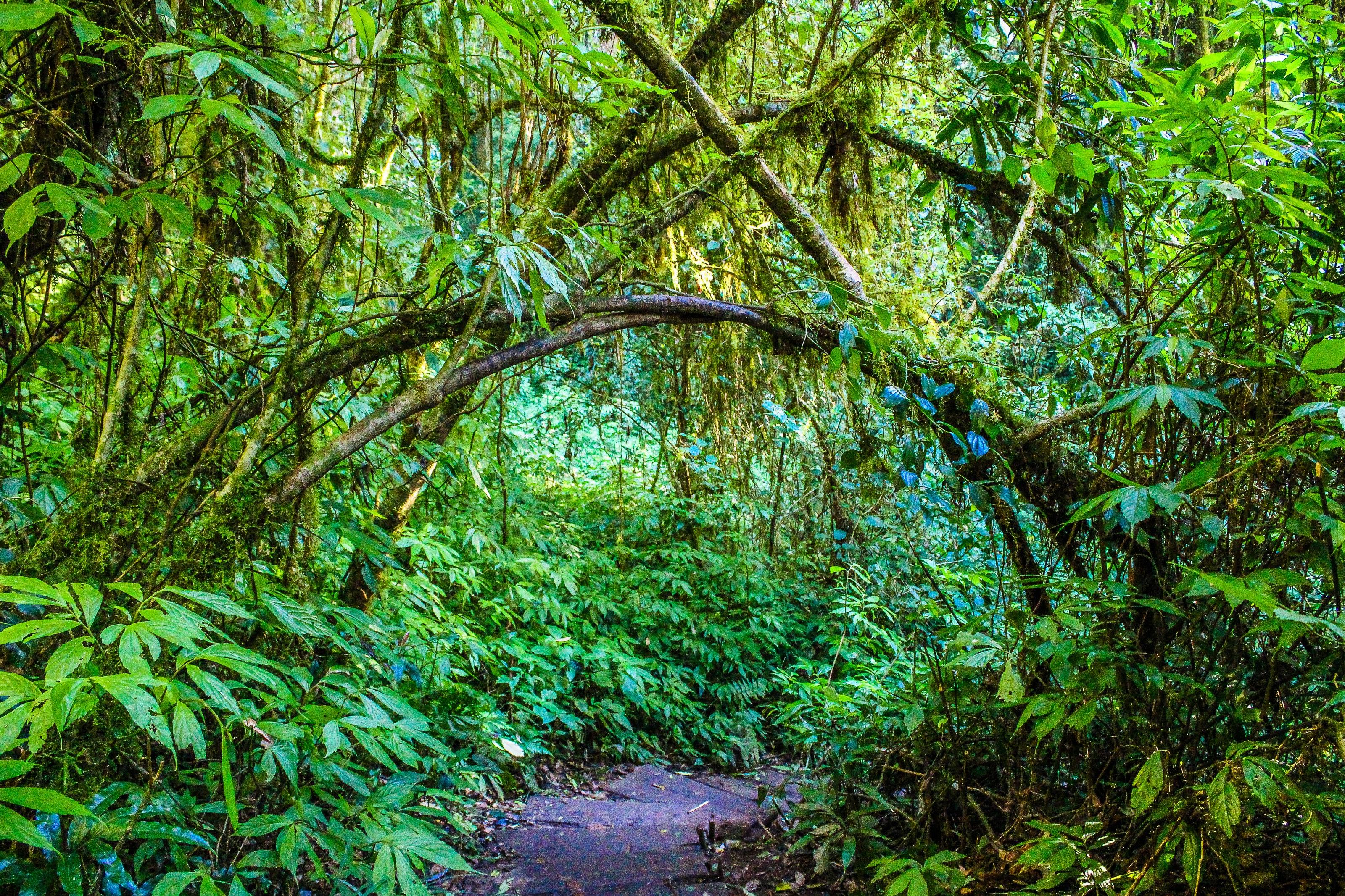 200 Great Jungle Photos 183 Pexels 183 Free Stock Photos