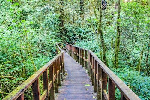 Fotobanka sbezplatnými fotkami na tému chodník, dažďový prales, denné svetlo, drevený most