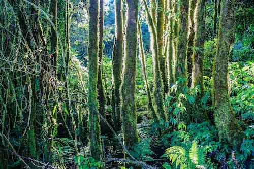 Foto d'estoc gratuïta de arbres, bosc, boscos, creixement